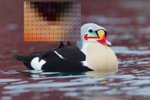 Ảnh Raster hay còn gọi là ảnh bitmap, được tạo thành bởi hàng ngàn điểm ảnh có chức năng tạo nên màu sắc và hình dáng